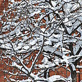 The Snow And The Wall by Frederico Borges