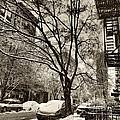 The Snow Tree - Sepia Antique Look by Miriam Danar