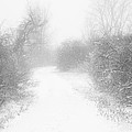 The Snowy Winter Path by Gary Heller