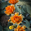 The Softer Side Of The Cactus by Ken Andersen