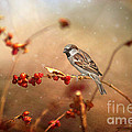 The Sparrow by Darren Fisher