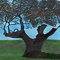 The Split Tree - Bradgate Park by Bav Patel