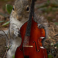 The Squirrel And His Double Bass by Sandra Clark