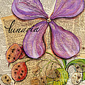 The Stages Of Money Plant Or Lunaria by GG Burns