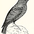 The Starling by English School