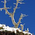 The Start Of Winter by Adam Jewell