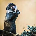 The Starving Ape by Stwayne Keubrick