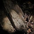 The Still Of The Light by Odd Jeppesen