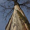 The Strange Tree by Guy Ricketts
