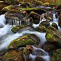 The Stream by Shari Jardina