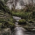 The Stream by Simon Gray