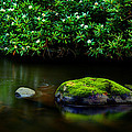 The Stream's Embrace by Michael Eingle