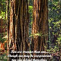 The Strength Of Two - From Ecclesiastes 4.9 And 4.12 - Muir Woods National Monument by Michael Mazaika
