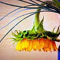The Sunflower Speaks by Deborah  Crew-Johnson