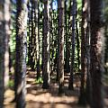 The Surreal Forest by Alex Potemkin
