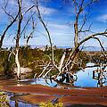 The Swamp #2 by Wayne Wood