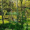 The Swamp by William Norton
