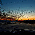 The Swarm by Matt Molloy