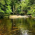 The Swimming Hole by Robert McCulloch
