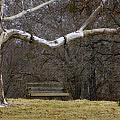 The Swing by Darrell Clakley