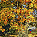 The Swinging Tree by Steve Harrington