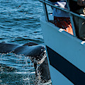 The Tail Of A Whale Right In Front by Joe Klementovich