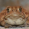 The Tennessee Toad by Jane McBride