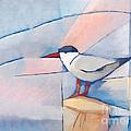 The Tern by Lutz Baar