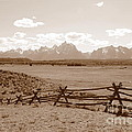 The Tetons In Sepia by Carol Groenen