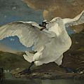 The Threatened Swan, Jan Asselijn by Quint Lox