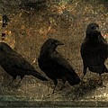 The Three Black Crows by Gothicrow Images