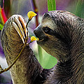 The Three-toed Sloth by Gary Keesler