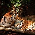 The Tigress  by Jim Garrison