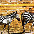 The Tired Zebras by Lydia Holly
