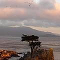 The Tree by Alan Johnson