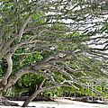 The Tree by Andrea Anderegg