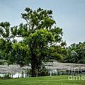 The Tree by Grace Grogan
