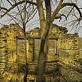 The Tree House 2 by Bonfire Photography