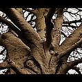 The Tree by Marysue Ryan