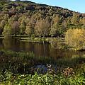 The Trees By The Loch by John Topman