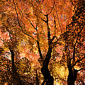 The Trees Dance As The Sun Smiles by Don Schwartz