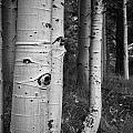 The Trees Have Eyes by Peter Tellone