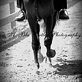 The Trot by Ann Butler