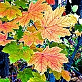 The Turning Leaves by Christy Gendalia