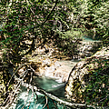 The Turquoise Waters Of The Forest River No2 by Weston Westmoreland