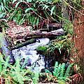 The Unknown Creek by Edward Hawkins II