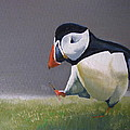 The Walking Puffin by Eric Burgess-Ray