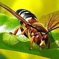 The Wasp by Zina Stromberg