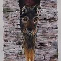 The Watchful Wolf by Corina Hogan