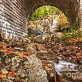 The Waterfall Bridge In Acadia by Susan Cole Kelly